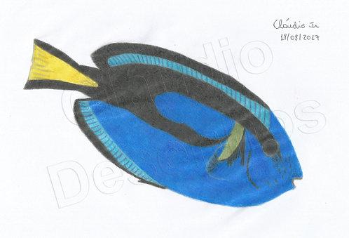 Peixe - Desenho feito a Mão Livre