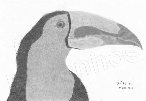 Desenho - Tucano Colorido feito a Mão Livre