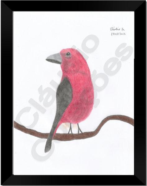 Quadro - Pássaro Vermelho - Desenho a Mão-livre