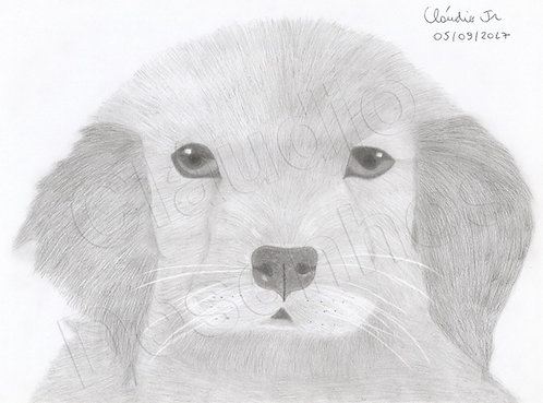 Cachorrinho - Desenho feito a Mão Livre