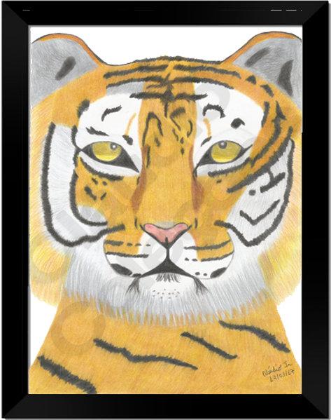Quadro - Tigre - Desenhado a Mão-livre em folha Couchê A4 com moldura e vidro.