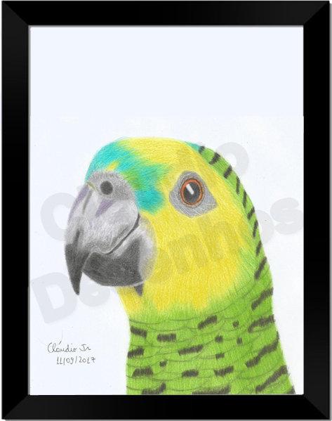 Quadro - Papagaio - Desenho a Mão-Livre - Tamanho A4
