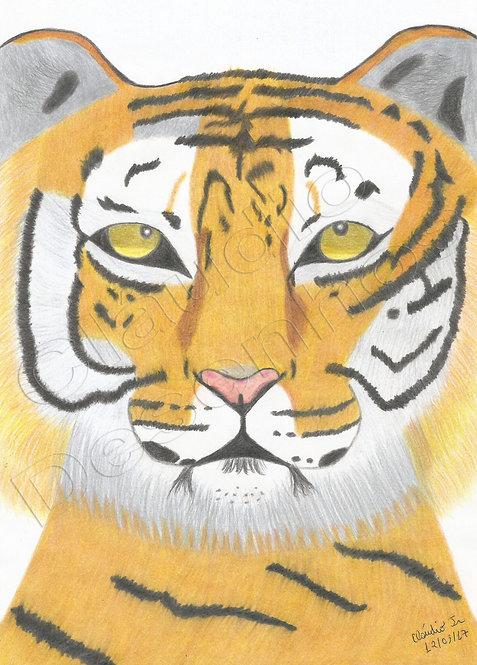 Tigre - Desenho feito a Mão Livre