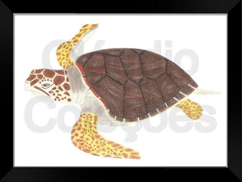 Quadro - Tartaruga - Desenhado a Mão-livre