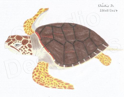 Tartaruga - Desenho feito a Mão Livre