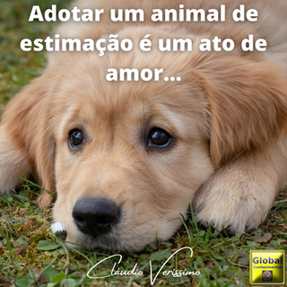 Adotar um animal de estimação é um ato de amor....png
