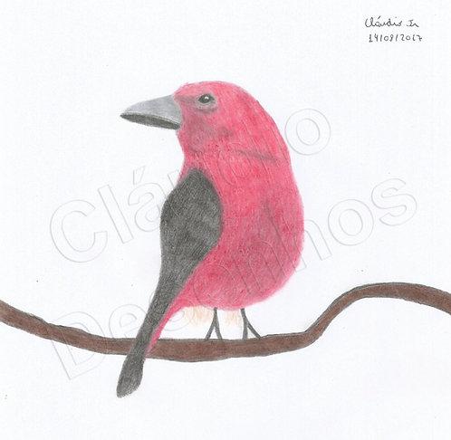 Pássaro - Desenho feito a Mão Livre