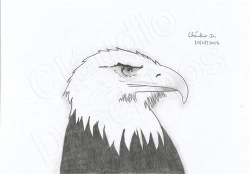 Águia - Desenho feito a Mão Livre