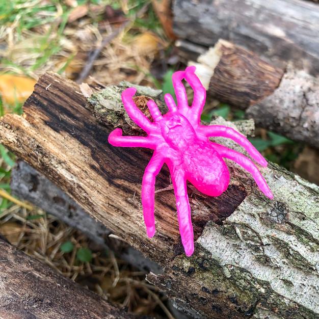.12ea, Common Sticky Spider
