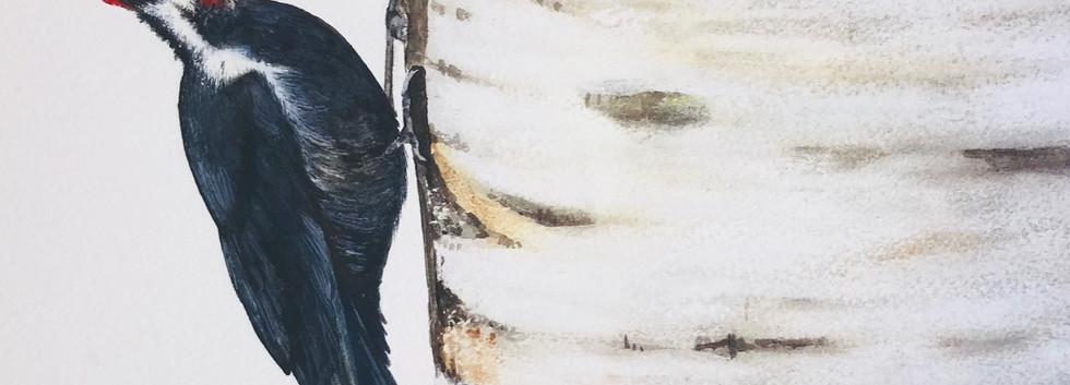 """Watercolour on birch 14""""x22"""""""