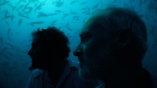 In the Deep See [Brian D. Greene, USA/Costa Rica, 2020]