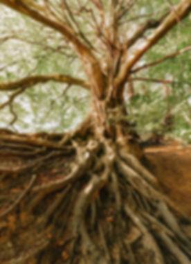 root-4426192_1920_edited.jpg