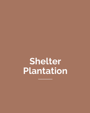 SHELTER - PLANTATION.png