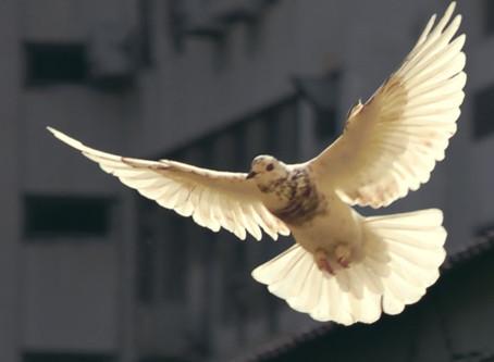 Pray For Peace - PB#52