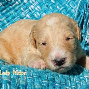 Lady Midori, Female, 2 weeks old