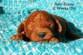 Dale Evans 2 weeks old