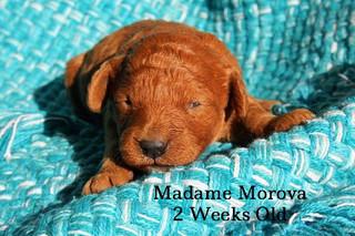Madame Morova 2 weeks