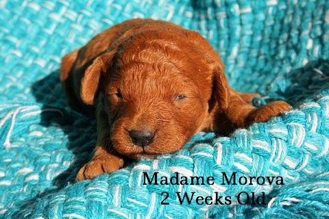 Madame Morova 2 Weeks Old
