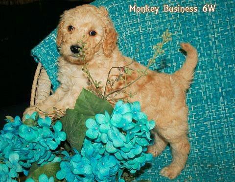 Monkey Business 6 weeks