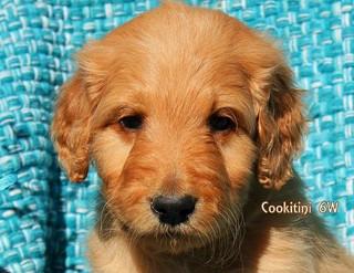 Sugar Cookitini 6 weeks