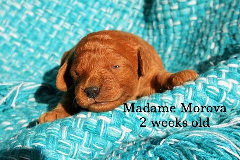Madame Morova 2 weeks old.