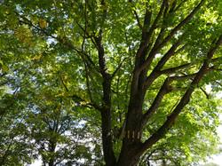 夢紀行の木