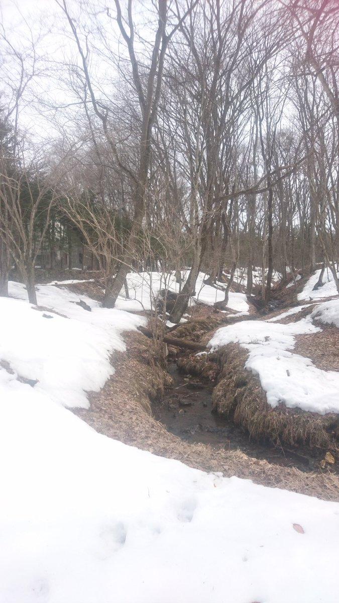 大学村の沢の雪解け