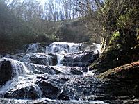 夏の魚止めの滝