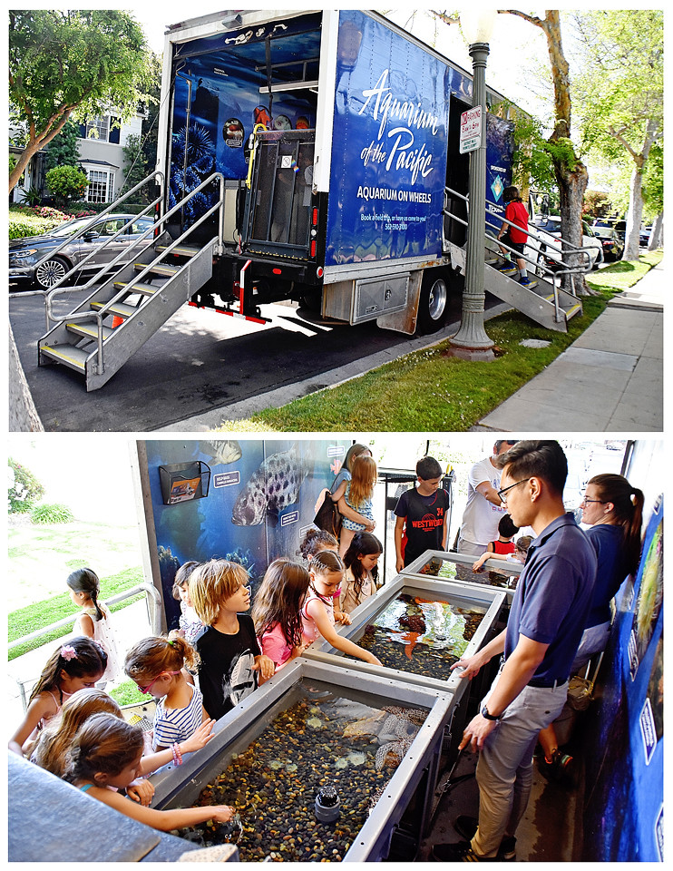 Aquarium on Wheels