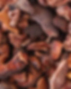 Cacao_concassé.jpg