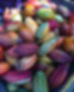 Cabosses de cacao.jpg