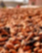 Séchage_fèves_cacao.jpg