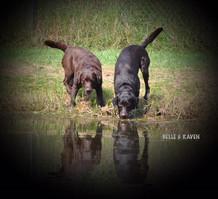 Belle and Raven.jpg