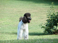 lrg-3-our_puppies_350.JPG