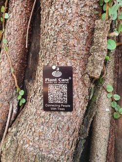 Inventário arbóreo - Escola Americana de Campinas (1)