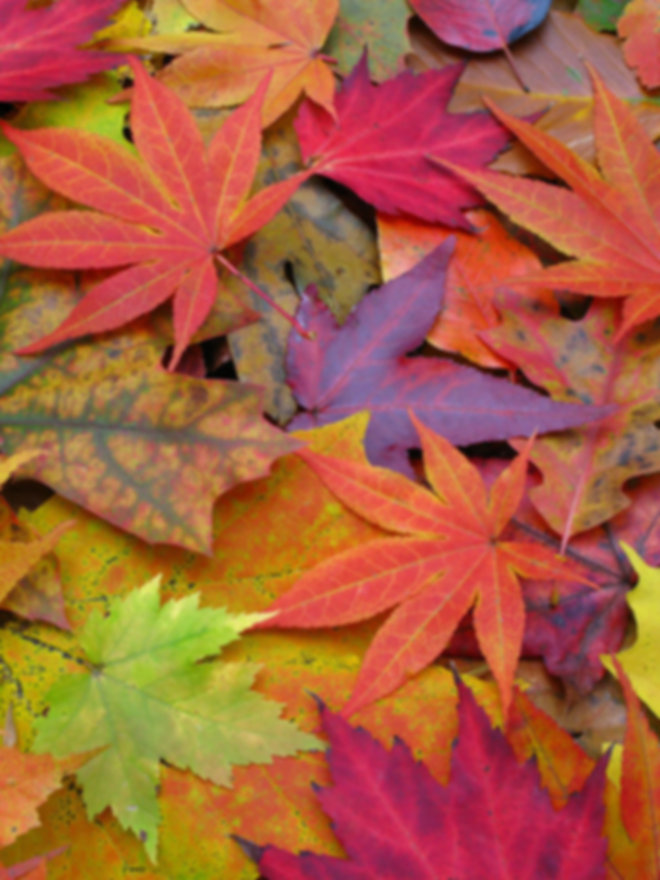 Fall Leaves all colors.jpg