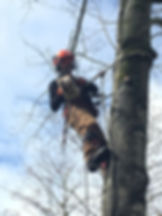 Pro Tree Services - John Pickard.jpeg