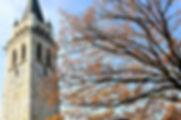 Pro Tree Services - tree-2898647_1920.jpg