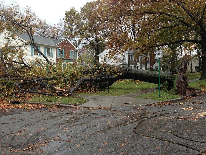 Pro Tree Services - fallen tree-229864_1920.jpg