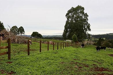rural-image-of-pukekohe-farm-of-rjm-lega