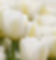 הרבנות והמועצה הדתית ראש פינה - מנהגי אבלות