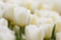 מועצה דתית ראש פינה - מנהגי אבלות