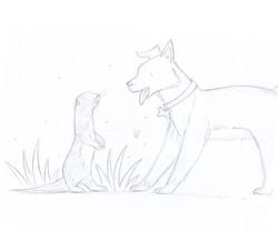 Otter meet dog