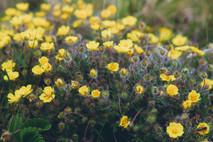 Полевые цветы,Тульская область. Wildflowers, Tula region.