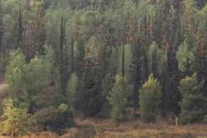 Иерусалимский лес. Jerusalem forest.