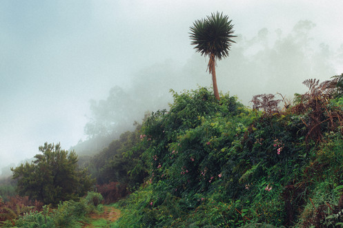 Road to Mount Teide