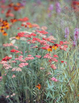 Полевые цветы. Wildflowers.