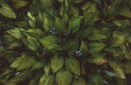 Цветы. Коломенское. Flowers. Kolomenskoye.
