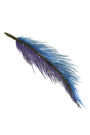 Feather one.png