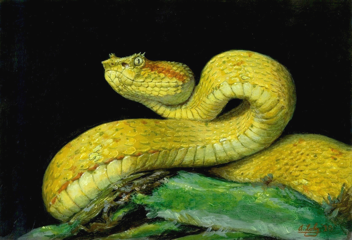 Reptiles Paintings